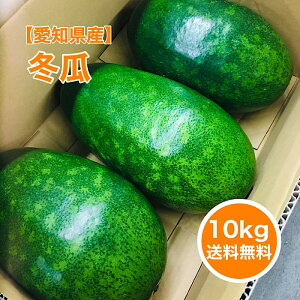 【愛知産】10kg 冬瓜 3玉入 まるごと とうがん おいしい 産地 スープ 熱中症対策 あっさり 送料無料