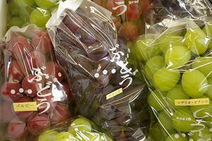 日向さん親子の葡萄詰合通販 山形ぶどうを販売取寄。 約2kg 【1箱 5種セット 5房】山形産