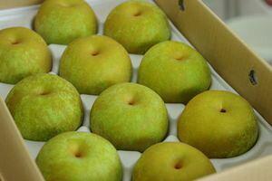 秋麗梨(しゅうれいなし)取寄販売 熊本の糖度約13度の和梨を通販で。約5kg 約10玉〜約16玉 熊本産