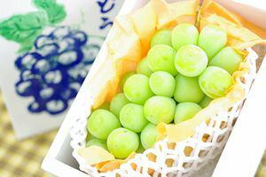 山形県シャインマスカットぶどう通販 種なし皮ごと食べられる葡萄を販売取寄。1房 約550g 9月中旬頃より