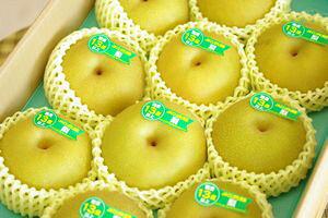 新潟幸水取寄販売 しろね地区糖度約13度の和梨を通販で果物ギフトに。一糖賞・糖鮮確実・梨の実館 約5kg 10玉〜16玉 新潟産