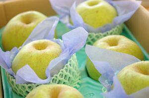 千葉県産の篤農家 香梨 かおり梨 通信販売 大玉系で独特の香りの青なしを販売取寄。約5kg 約5玉〜約10玉
