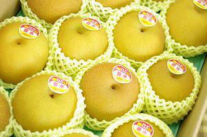 新潟豊水取寄販売 しろね地区糖度約13度の和梨を通販で果物ギフトに。一糖賞・糖鮮確実・梨の実館 約5kg 10玉〜16玉 新潟産
