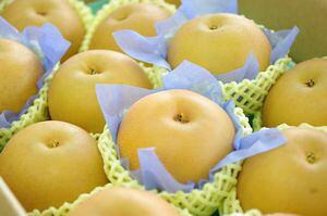 秋月梨(あきづき梨)取寄販売 和梨を通販で。約5kg 約8玉〜約14玉 千葉・他産地
