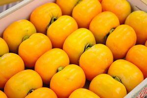 庄内柿販売取寄 種が無くなめらかな食感の柿を通販で。2L〜3Lサイズ 約5k 約20玉〜約24玉 山形産