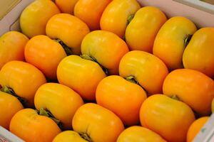 庄内柿お取り寄せ 種が無くなめらかな食感の柿を販売通販。2L〜3Lサイズ 約10k 約40玉〜約48玉 山形産
