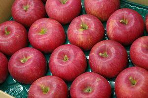 シナノスイートりんご取寄販売 長野生まれのシナノりんごを通販で。約5kg 約14玉〜約18玉 長野・他産地