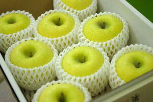 シナノゴールドりんご通信販売 爽やかな酸味が特徴のシナノりんごを販売取寄。中箱 約7玉〜約9玉 山形・長野・他産地