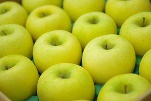 シナノゴールドりんご取寄販売 爽やかな酸味が特徴のシナノりんごを通販で。約5kg 約14玉〜約18玉 山形・長野・他産地