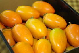 筆柿(ふでがき)通販 愛知県幸田町特産の珍宝柿を販売取寄。約3kg 約20玉〜 愛知産