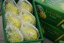 お歳暮ルレクチェ通販 新潟県特産の西洋梨レクチェを販売取寄。約2kg 約5玉〜約7玉