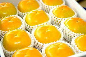 太秋柿(たいしゅうがき)通販 うずまき状の条紋が特徴の甘柿を販売取寄。約3kg 約9玉〜約12玉 熊本産・他産地