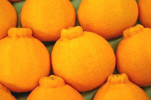 お歳暮デコポン通販 糖度約13度の凸が特徴の柑橘を販売取寄。12月配送 約7玉〜約9玉 熊本・他産地