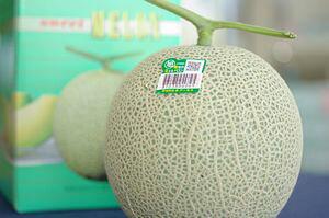 旭村マスクメロン通販 茨城産。糖度の見えるアールスメロンを販売。果物ギフトに 糖度約13度 1玉