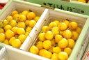 お中元月山錦さくらんぼ販売 1kg バラ詰め 2L〜3L 幻の黄色い山形さくらんぼ通販ギフトは7月上旬 ランキングお取り寄せ