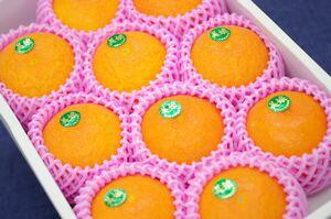 美娘みこ通販 お歳暮ギフトに大分県杵築産天草オレンジを販売取寄。化粧箱 約8玉〜約10玉入