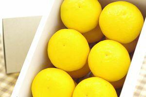 ニューサマーオレンジ通販 小夏・日向夏とも呼ばれる柑橘を販売取寄。約2kg 愛媛・他産地
