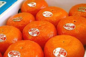 ハウスアンコールオレンジ通販 鮮やかな紅色の果皮が特徴の柑橘を販売取寄。約9玉〜約13玉 愛媛・他産地
