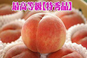 新福島のサンピーチ桃通販 福島ブランド桃を取寄販売。中箱 約7玉〜約9玉