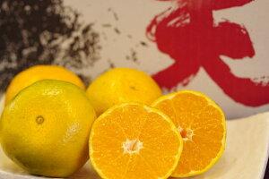 極早生みかん 紀南の木熟みかん 天(てん) 糖度11度以上 5kg S〜L 和歌山県産 10月中旬から10月下旬頃