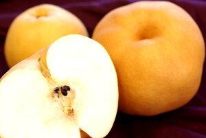 あたご梨 愛宕梨通販 お歳暮に大きい和梨を販売。約2玉〜約3玉 鳥取・岡山・他産地