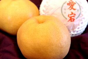 愛宕梨 あたご梨通信販売 お歳暮に大きい和梨を販売。約4玉〜約7玉 鳥取・岡山・他産地