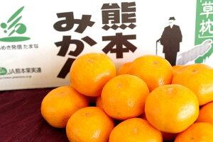 草枕みかん販売 お歳暮熊本みかん通販にJAたまなブランド蜜柑をお取り寄せ 糖度12度以上 5kg S〜L