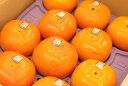秋王(あきおう)柿 通販 福岡県産の甘柿で種がない新品種 約6玉入