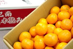 紀南の木熟みかん 天(てん) 和歌山県産をお歳暮みかんに。糖度12度以上 5kg S〜L