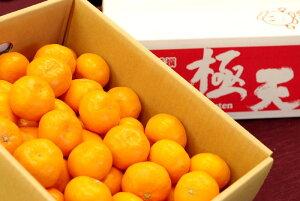 紀南の木熟みかん 極天(ごくてん) 和歌山県産をお歳暮みかんに。糖度13度以上 5kg S〜L