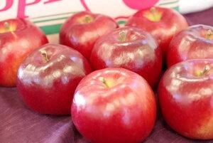 紅の夢りんご販売(果肉が赤いリンゴ通販) 料理加工用に取寄せ!パティシエ製菓店御用達の林檎ご品種 11月上旬頃 小箱 約5玉〜約6玉 若干傷ありサイズ混合