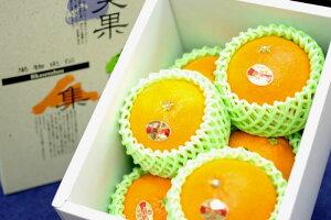 紅まどんな通販 お歳暮に愛媛県ゼリーの様な食感が特徴の柑橘を販売取寄。約6玉〜約7玉