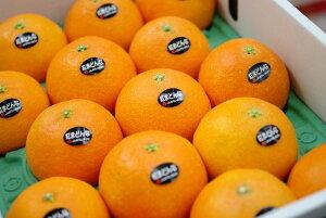 紅まどんな通信販売 お歳暮に愛媛県ゼリーの様な食感が特徴の柑橘を販売取寄。約10玉〜約15玉