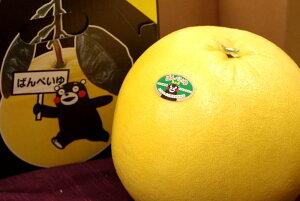 晩白柚(ばんぺいゆ)通販 お歳暮ギフトに熊本県八代産の特大柑橘を販売取寄。12月配送 1玉 熊本産