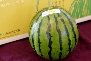 ルナピエナすいか販売 通販で高知県土佐香美Luna Piena西瓜のお取り寄せ 夜須の立体温室栽培  1玉