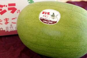 ゴジラのたまご西瓜販売 北海道月形町大玉スイカを通販で取寄。化粧箱入れ1玉3L〜5L