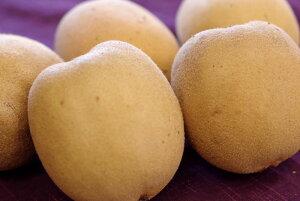 さぬきゴールドキウイフルーツ販売 香川県産を通販取寄せ 国産のゴールドキウイ 糖度13・5度以上 約16玉〜約24玉