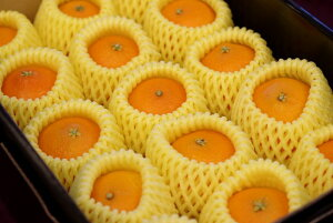 M〜L小さめサイズ 紅まどんな お歳暮に愛媛県ゼリーの様な食感が特徴の柑橘 約12玉前後