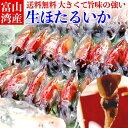 【 遂に解禁 】 富山湾産 生 ほたるいか 250g×4 送料無料 朝獲れ 冷凍 期間 限定 富山 蛍烏賊 ホタルイカ いか 新鮮…
