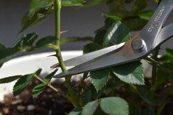 [長谷川刃物/CANARY]家庭園芸はさみ(AW-165HB-E)家庭用家庭菜園農作物摘み取りはさみ芽かき葉かき収穫