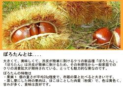 [長谷川刃物/CANARY]ぽろたん専用ハサミぽろカット(PS-50P)栗皮剥きポロタン栗敬老の日皮むきはさみ中津川刃物市場