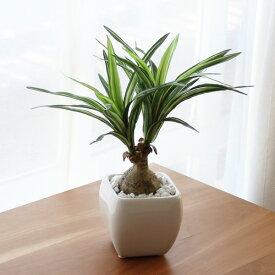 トックリラン人工観葉植物 アートグリーン消臭抗菌 光触媒 テルクリン 選択可インテリアグリーン 開店祝い 開業祝
