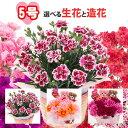 遅れてごめんね母の日 (数量限定) 5号カーネーション選べる生花と造花生花の品種・色はおまかせになります。