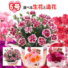 遅れてごめんね 母の日 (数量限定) 5号カーネーション選べる生花と造花生花の品種・色はおまかせになります。