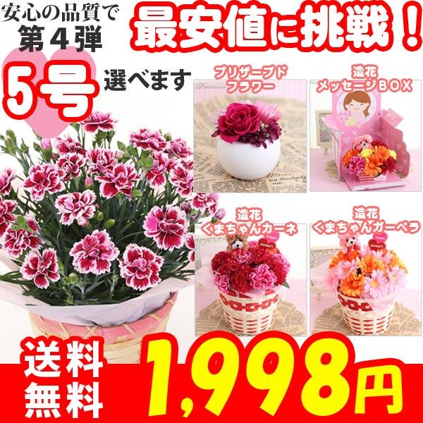 母の日 カーネーション5号選べるプリザーブド、生花、造花プレゼント 花 ギフト
