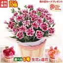 母の日 カーネーション5号選べる生花と造花母の日のプレゼント 花 ギフト