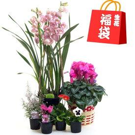 福袋 生花例 シンビジューム1鉢 シクラメン1鉢 花苗4鉢