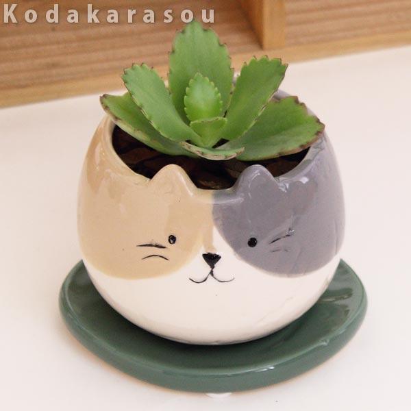 子宝草アニマルPOT陶器鉢(陶器鉢皿付)高さ12cm〜15cm観葉植物(生花)