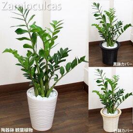 ザミオクルカス 白陶器鉢高さ75cm〜85cm白陶器鉢+鉢カバー黒or白生花 観葉植物