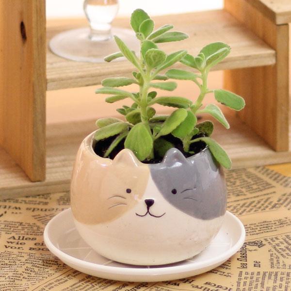 アロマティカス キュバンオレガノアニマルPOT陶器鉢(プラ鉢皿付)高さ12cm〜15cm観葉植物(生花)